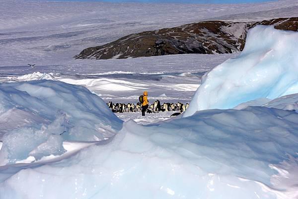 南極冰原 帝企鵝部落