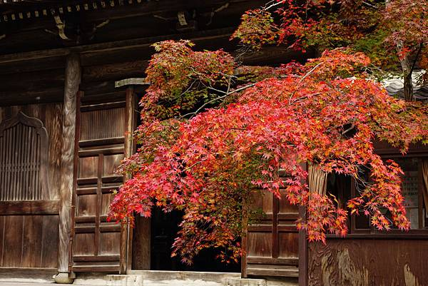 日本 京都 清涼寺