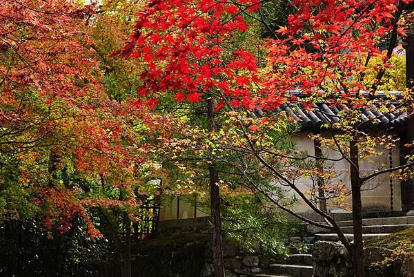 日本 京都 二尊院