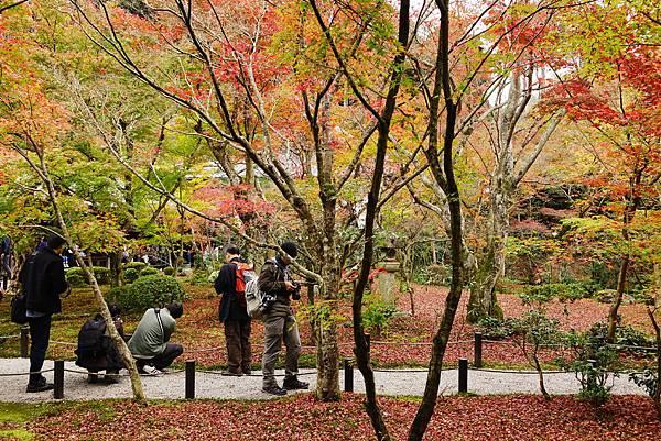 日本 京都 圓光寺