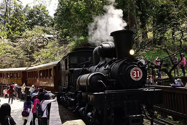 阿里山 蒸氣火車