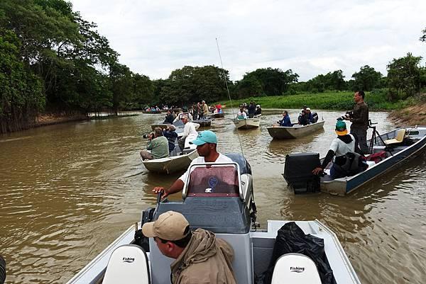 巴西 潘塔納爾濕地 河流拍攝美洲豹