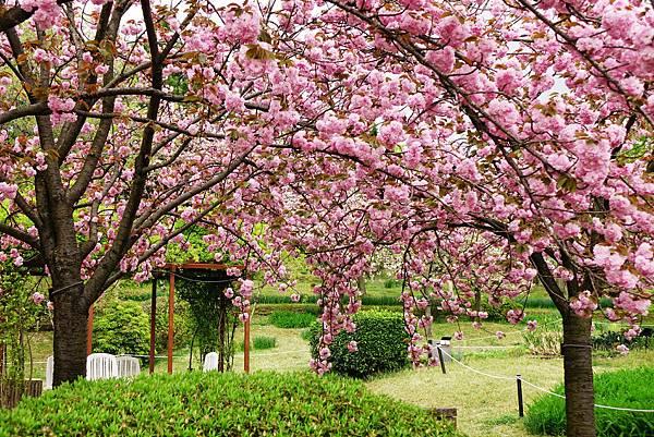 宇治植物園