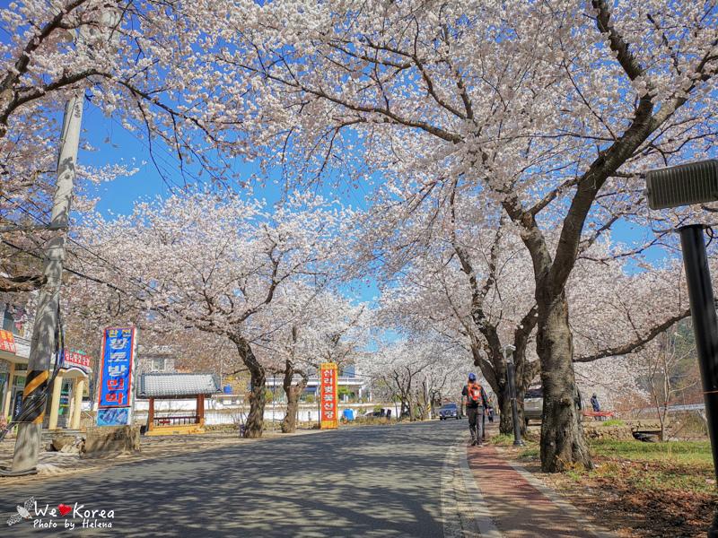 十里櫻花路-12.jpg