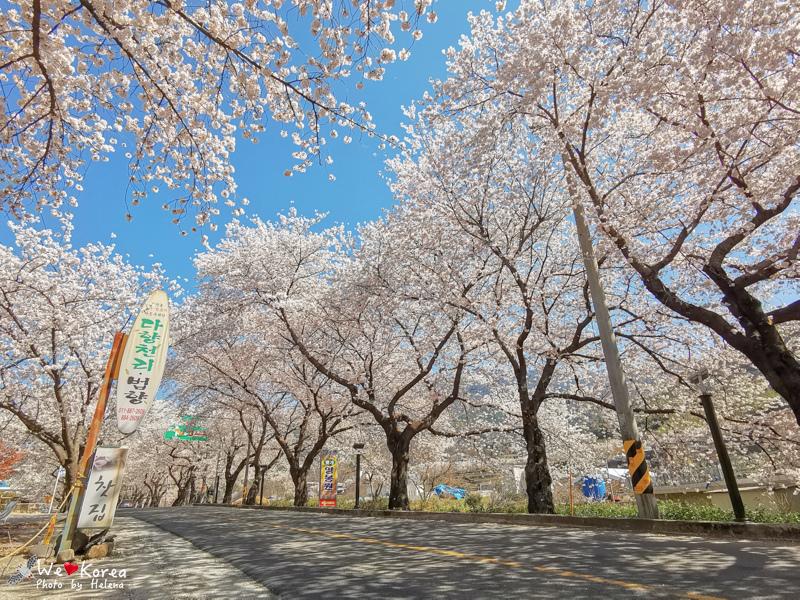 十里櫻花路-14.jpg