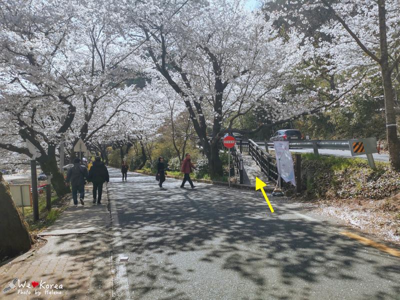 十里櫻花路-21.jpg