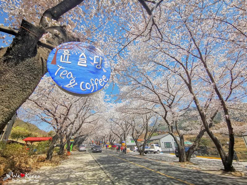 十里櫻花路-27.jpg