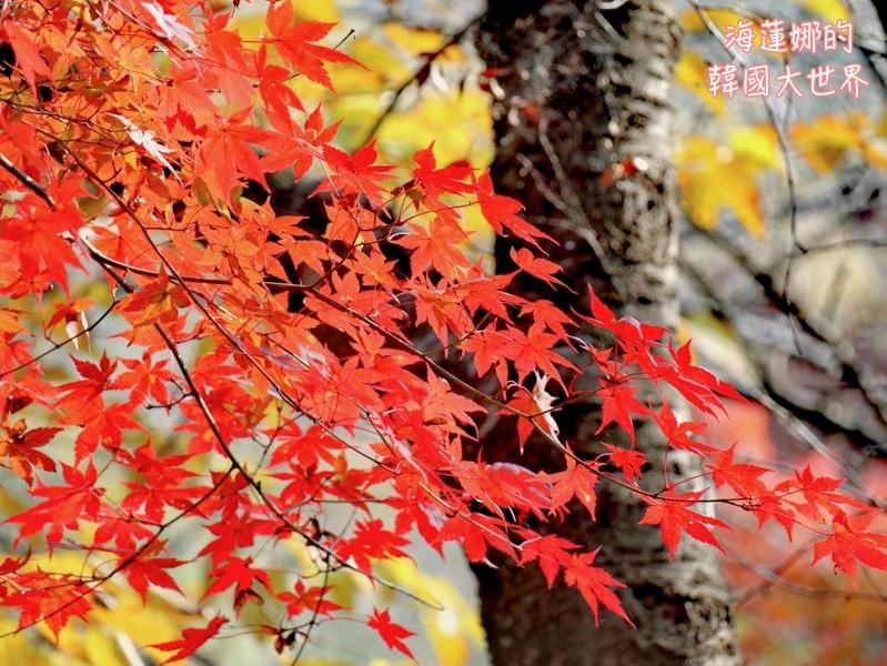 內藏山(釜山出發)-20.jpg