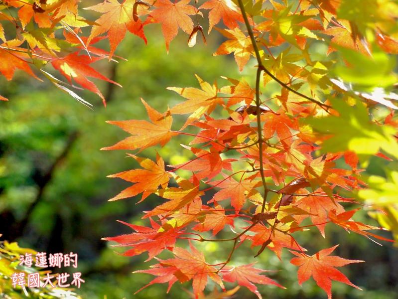 內藏山(釜山出發)-21.jpg