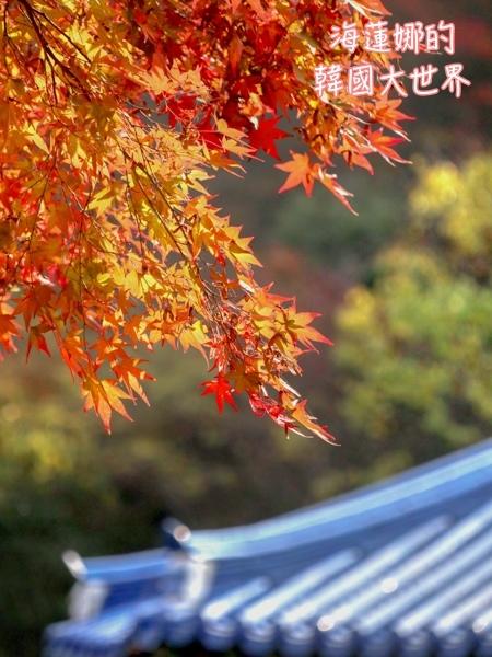 內藏山(釜山出發)-26.jpg