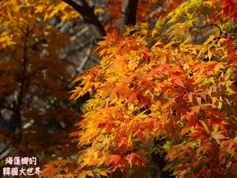 batch_雪嶽山-23.jpg