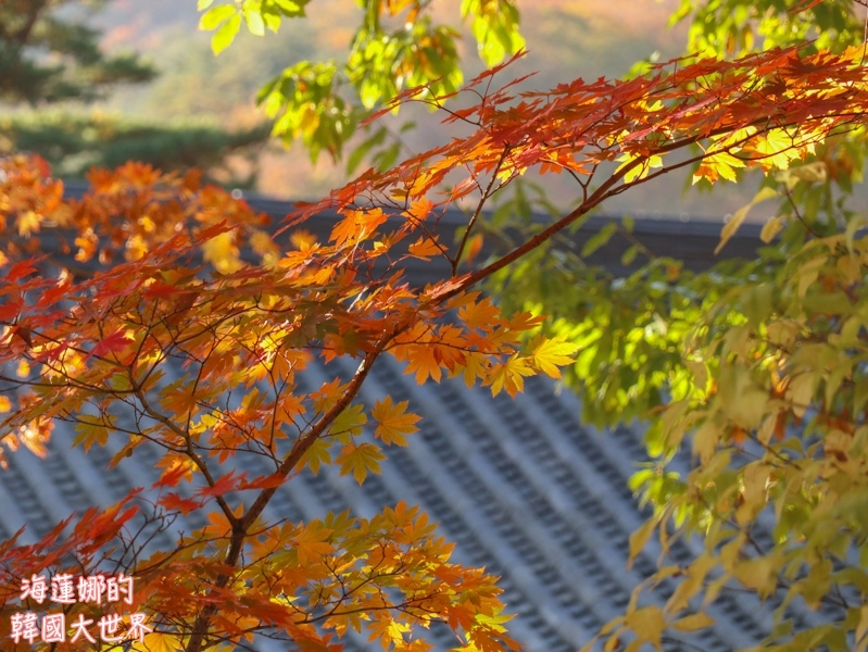 batch_雪嶽山-32.jpg