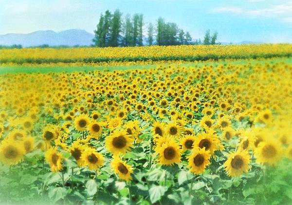 9-10. 是幸福,是寂寞-四元素-向日葵