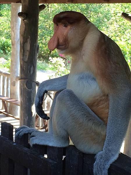 長鼻猴-1