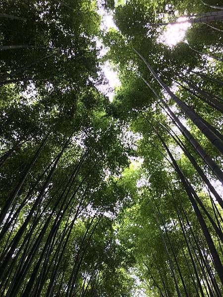 竹林天空.jpg