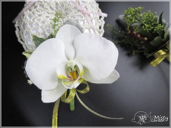 蝴蝶蘭新郎襟花