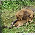 姿勢才擺好~下一秒就被母獅子吼了一聲XDDDD