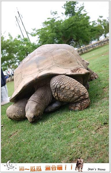 好大隻的烏龜~~~請大家拍照不要倚在他身上喇!!