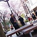 唯一的櫻花樹開了