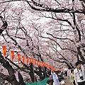 天氣很好,上野公園人好多~