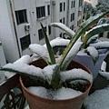 江蘇ㄌㄧ雪景