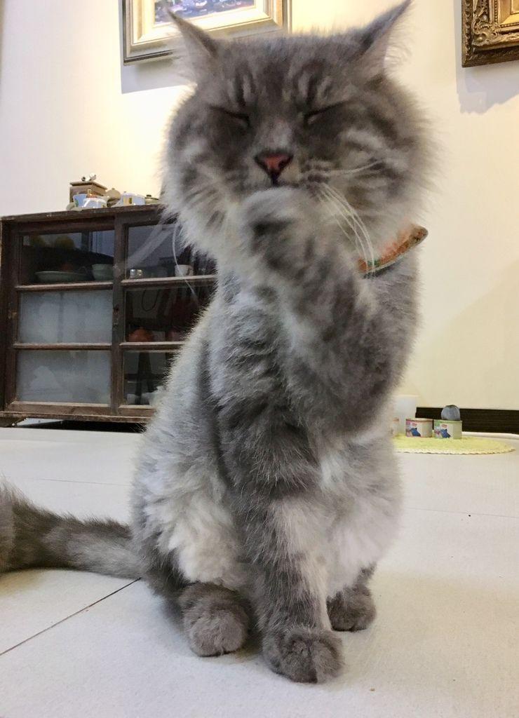 PURRFACT 波菲特貓用主食罐09