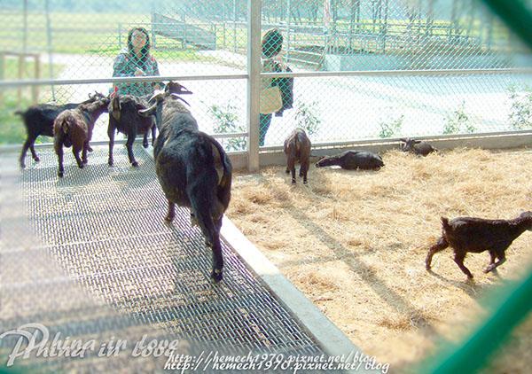 動物原拼圖2