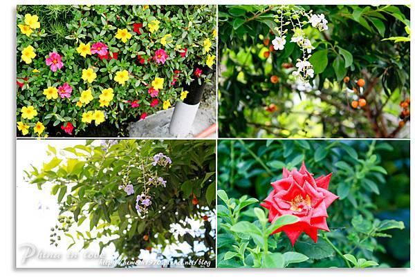 美麗的花1.jpg