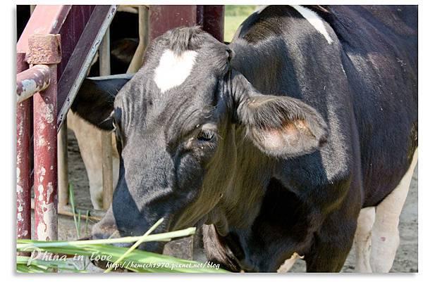 日月山景休閒農場20140716已修圖052.jpg