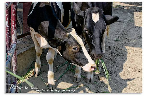 日月山景休閒農場20140716已修圖053.jpg