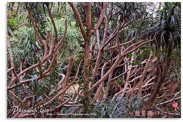 墾丁社頂公園自然景觀05.jpg