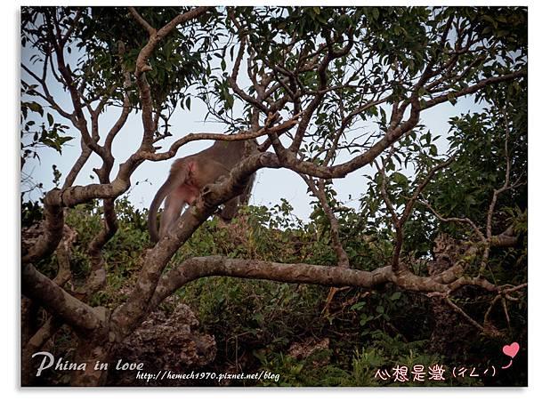 墾丁社頂公園自然景觀19.jpg
