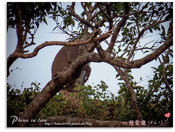 墾丁社頂公園自然景觀20.jpg