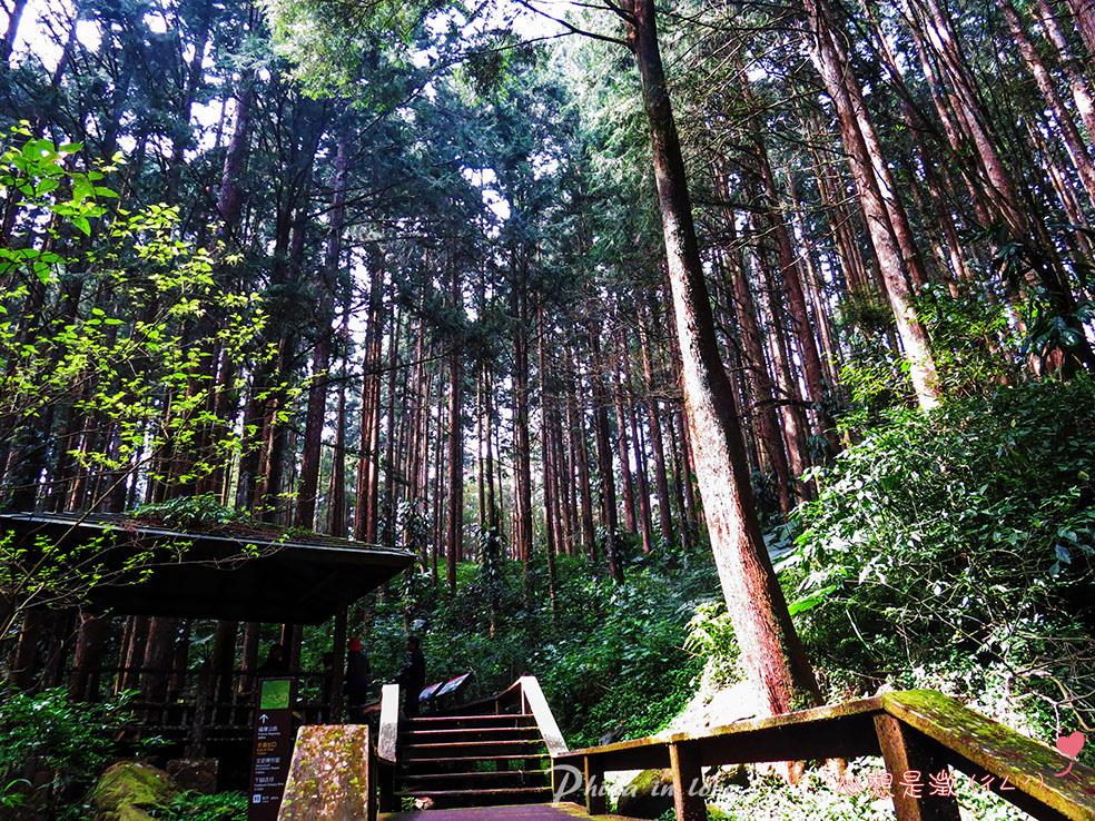 療癒森林(8) 拷貝.jpg