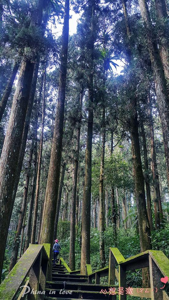 手機療癒森林(4) 拷貝.jpg