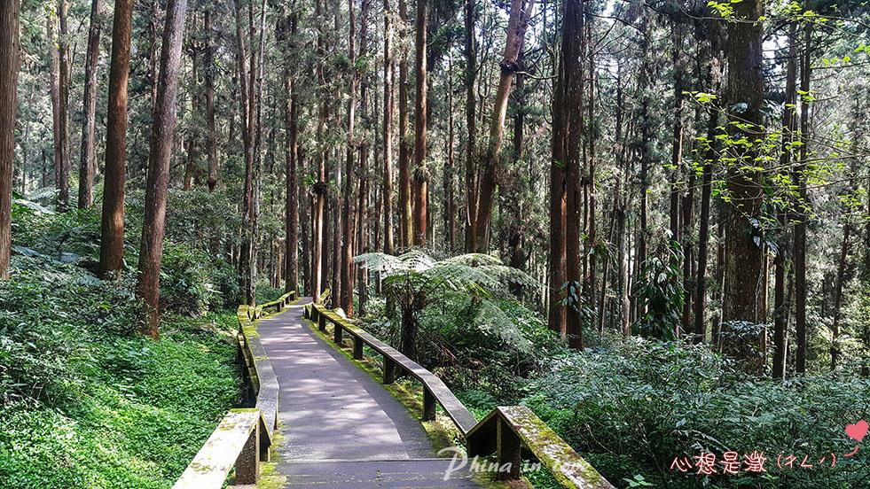 手機療癒森林(5) 拷貝.jpg