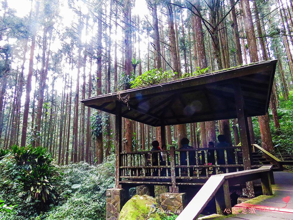 療癒森林(3) 拷貝.jpg