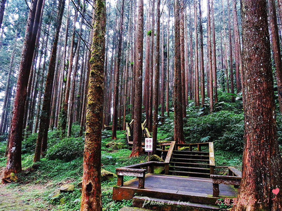 療癒森林(6) 拷貝.jpg
