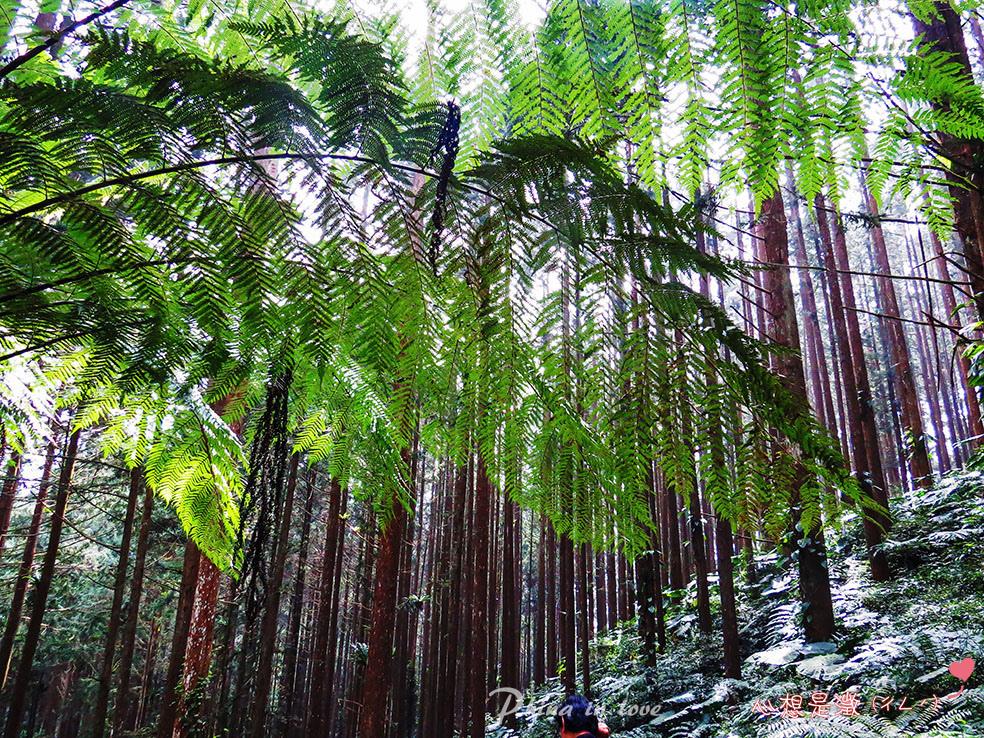 療癒森林(4) 拷貝.jpg