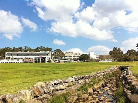 【遊】澳洲雪梨★Macquarie University★綠地、湖水、植物。享受Macquarie大學的校園大自然