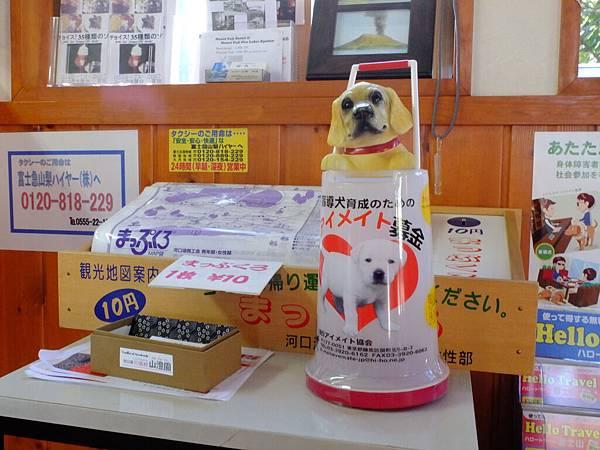 捐錢幫助狗狗