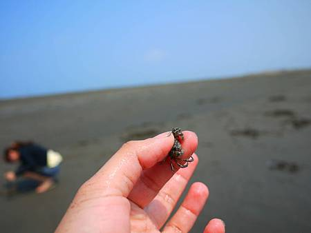 我挖到螃蟹啦~