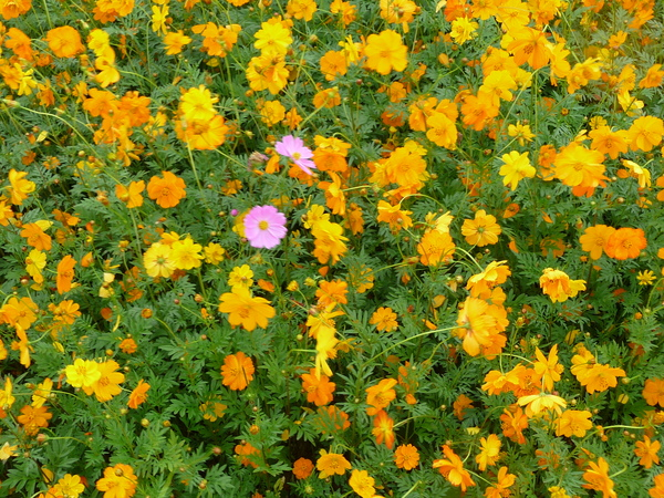 小花中的異類