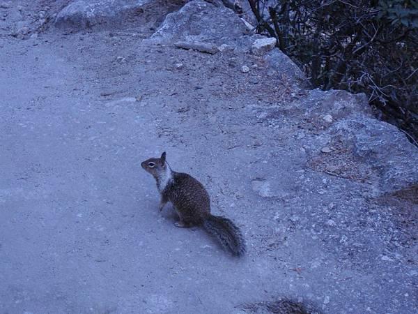 11-1023-Yosemite-085-松鼠.JPG