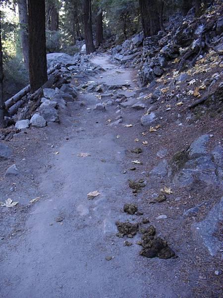 11-1023-Yosemite-087-馬糞.JPG