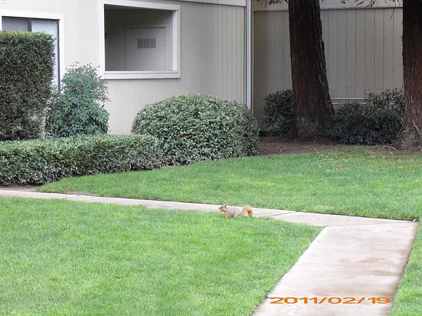 11-0219家門口的松鼠4.jpg