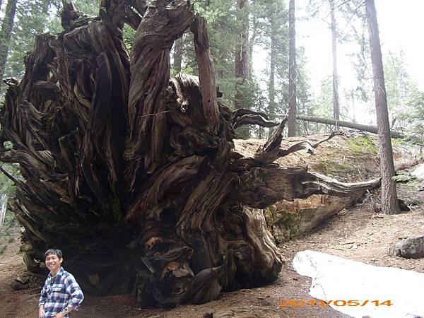 69 - 倒下的樹根底 & Ryan.jpg
