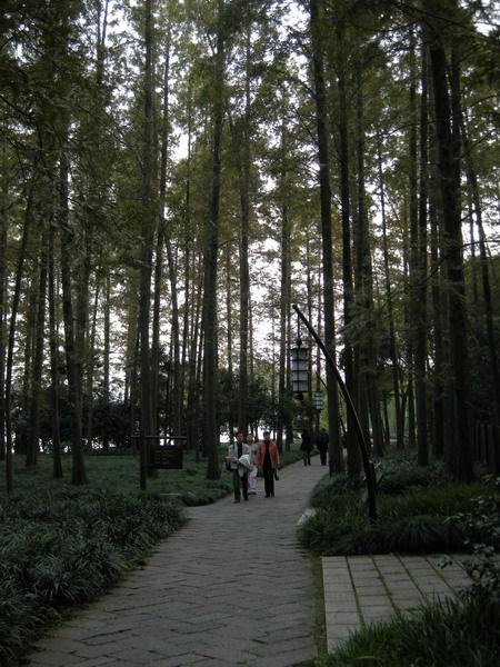 西湖 16