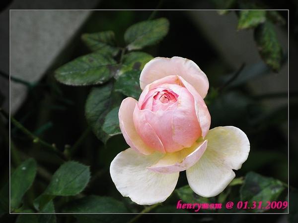 20090204_3.jpg