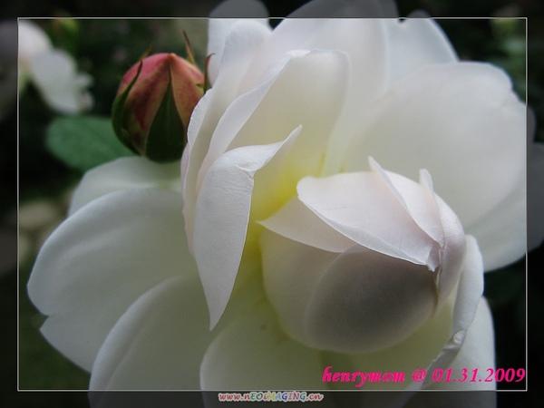 20090204_5.jpg